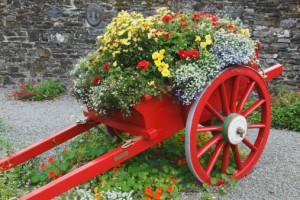 Irish flower Cart from Seed Bombs