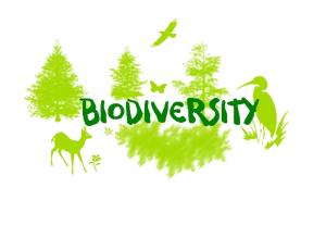 biodiversity Seed Bombing Ireland