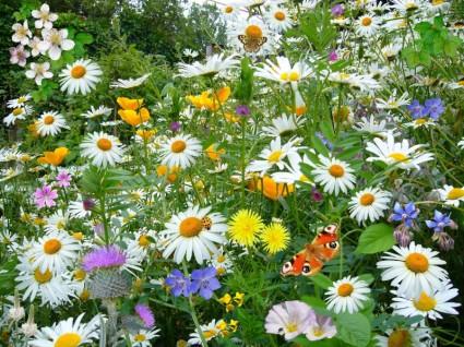 Wildflower Seed Bomb Mix - Native Organic Irish Wildflower