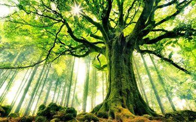 Seed bomb Tree