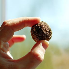 Wild Flower seed bombs